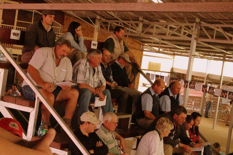 Dormer National Auction 2016